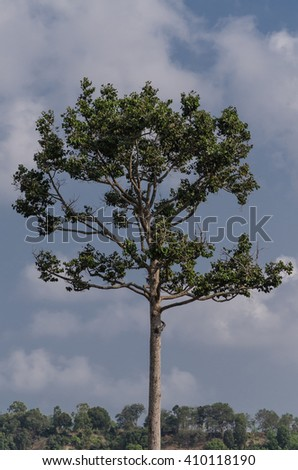 Tree and blue sky in forest,landscape