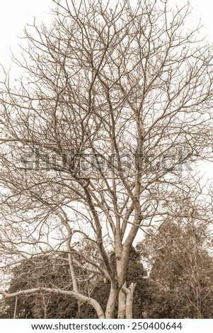 Tree and branches of the tree. - stock photo