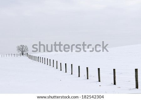 Tree and Fence on Snowy Day - stock photo