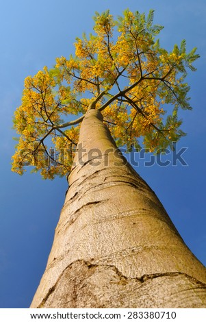 tree and flowers - stock photo