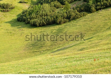 tree and green meadow