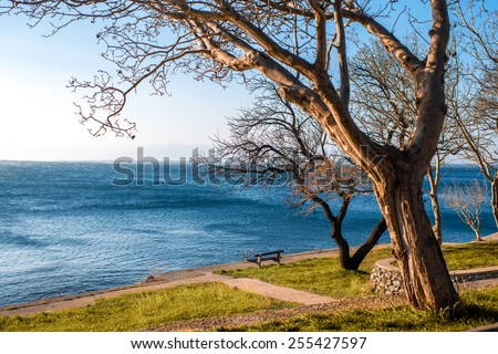 Tree and lonely bench on the adriatic sea coast in Senj city in Croatia