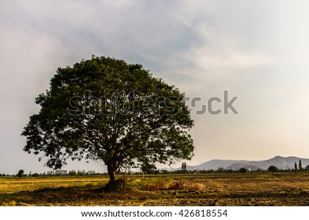 tree and meadow