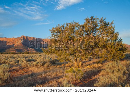 Tree and scrub brush dot a landscape in southern Utah's wilderness. - stock photo