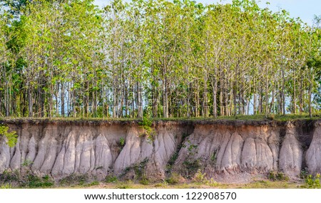 Tree and section of soil. Erosion due to water erosion. - stock photo