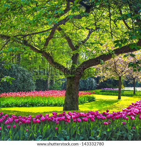 Tree and tulip flowers garden or field in spring. - stock photo