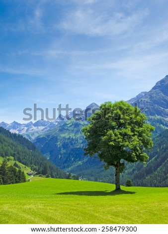 tree and view to a beautiful rural alpine landscape - stock photo