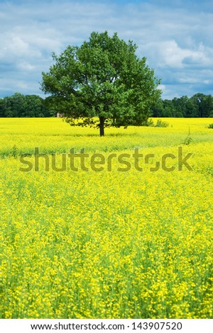 Tree and yellow rape field - stock photo