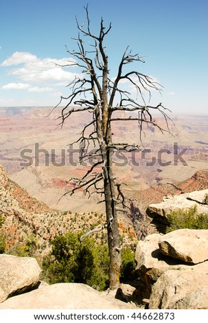 tree at Moran Point overlook - stock photo