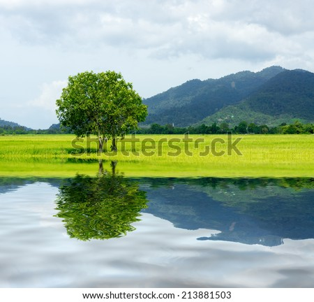 tree at paddy field