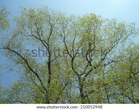 tree at spring sunny day - stock photo