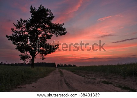 tree at sunset - stock photo