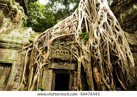 Tree at Thaphom Temple, Cambodia - stock photo