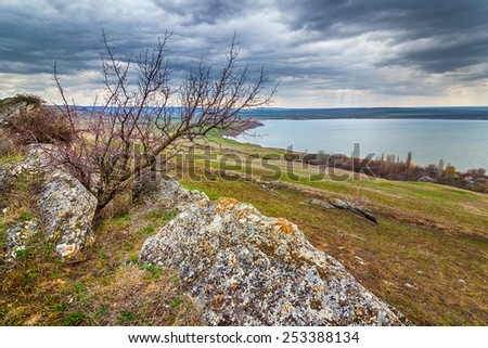 Tree at the concretion stone with moss and lichens at early spring under heavy clouds, Stavropol kray, Russian Federation - stock photo
