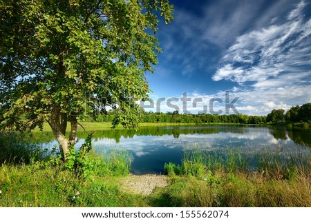 Tree at the lake shore in summer - stock photo