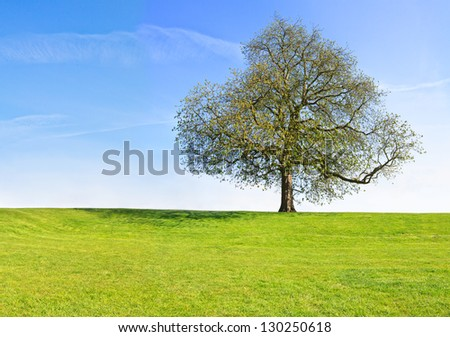 Tree at the top of the green hill - stock photo