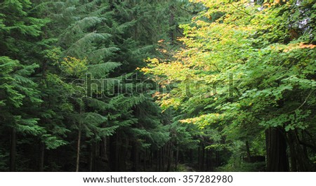 tree background - stock photo