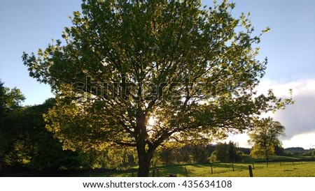 Tree backlit by setting sun - stock photo