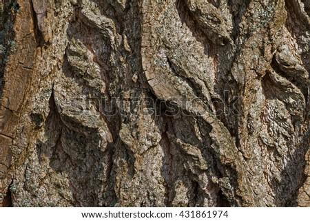 Big Bark Natural Bones