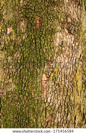 tree bark as background - stock photo