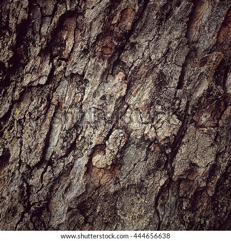 tree bark background old bark wooden Tree bark texture forest background.
