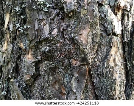 Tree bark background or texture