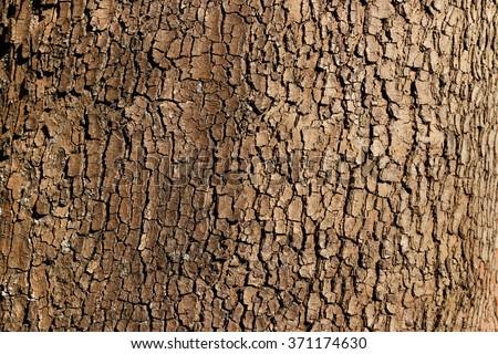 Tree bark background / texture - stock photo