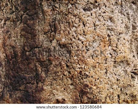 Tree bark background texture pattern. - stock photo