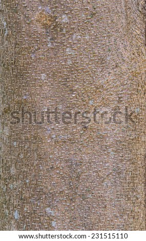 tree bark background texture pattern. - stock photo