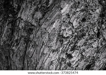 tree bark bent wave. black and white texture - stock photo