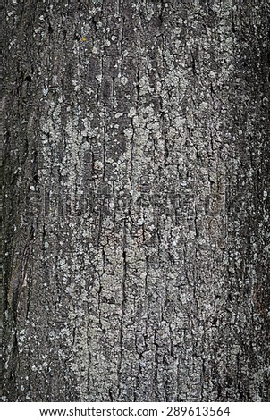 Tree bark close up - stock photo