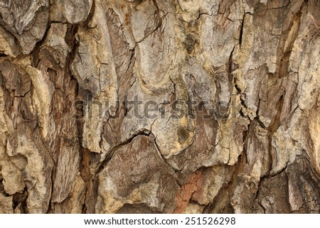 Tree bark detail, abstract background. - stock photo