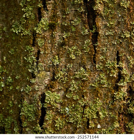 Tree Bark Detail with Moss - Fungus and selective focus - stock photo