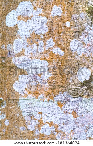 tree bark in the background - stock photo