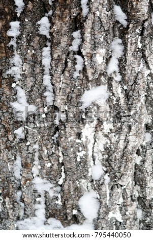 tree bark in the snow, winter