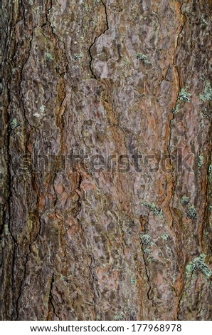 tree bark of a old german tree with little bit moss - stock photo