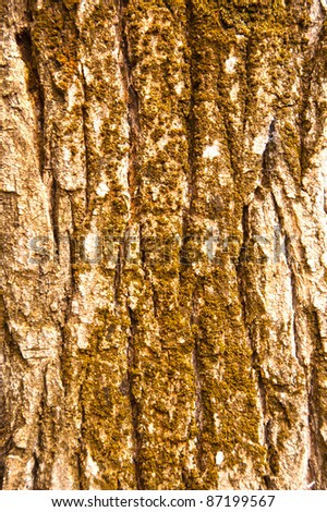 tree bark pattern from the north of Israel - stock photo