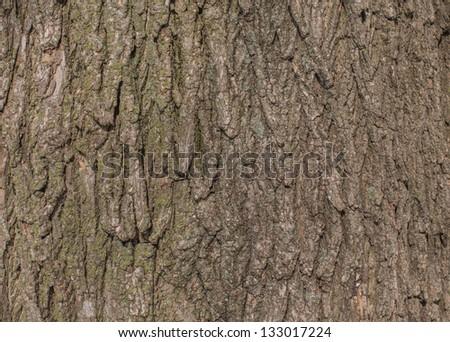 Tree bark texture - stock photo