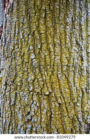 Broken Tree Branch Texture Tree bark texture