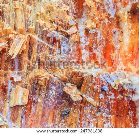 Tree bark texture and  Tree sap, pine resin - stock photo