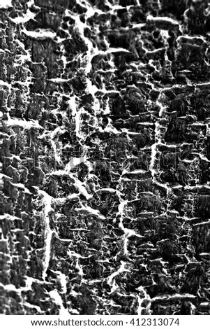 Tree bark texture (background) - stock photo