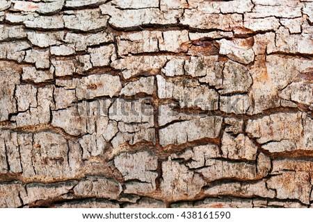 Tree bark texture background. - stock photo