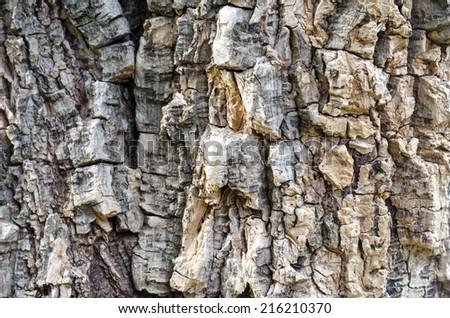 Tree bark Texture Background Pattern - stock photo