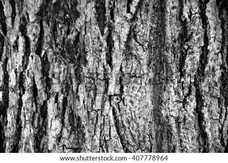 Tree Bark Texture black and white - stock photo