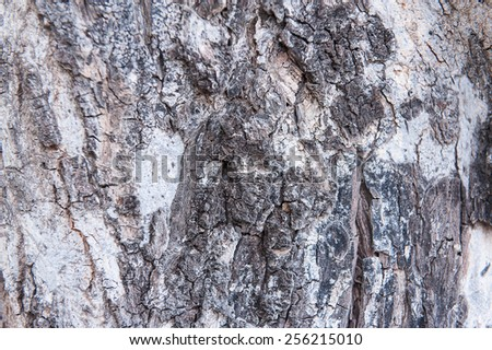 Tree bark texture blur - stock photo