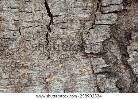 Tree bark texture for background  - stock photo