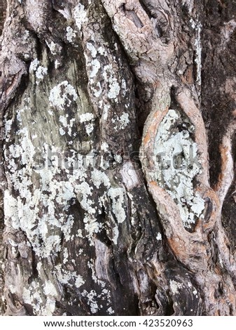 Tree bark texture, Old Wood Tree Texture Background Pattern
