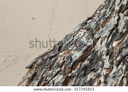 tree bark texture on beach. Focus on the middle point of the image.