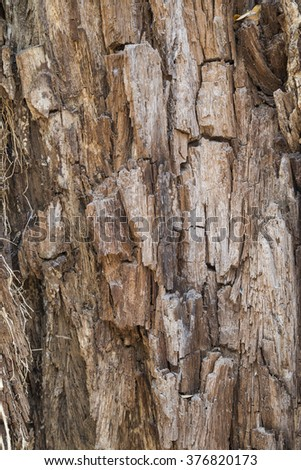Tree bark texture use as natural background.