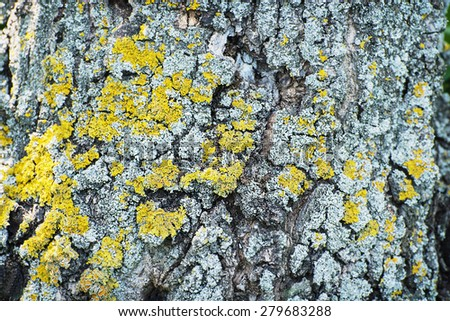 Yellow Trees Images Tree Bark With Yellow Lichens